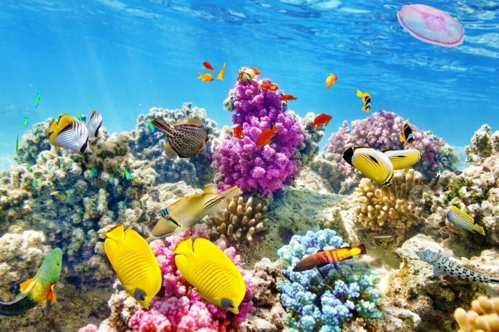 Healthy marine environments are important. Unfortunately they are threatened by pollutants such as BP-3.