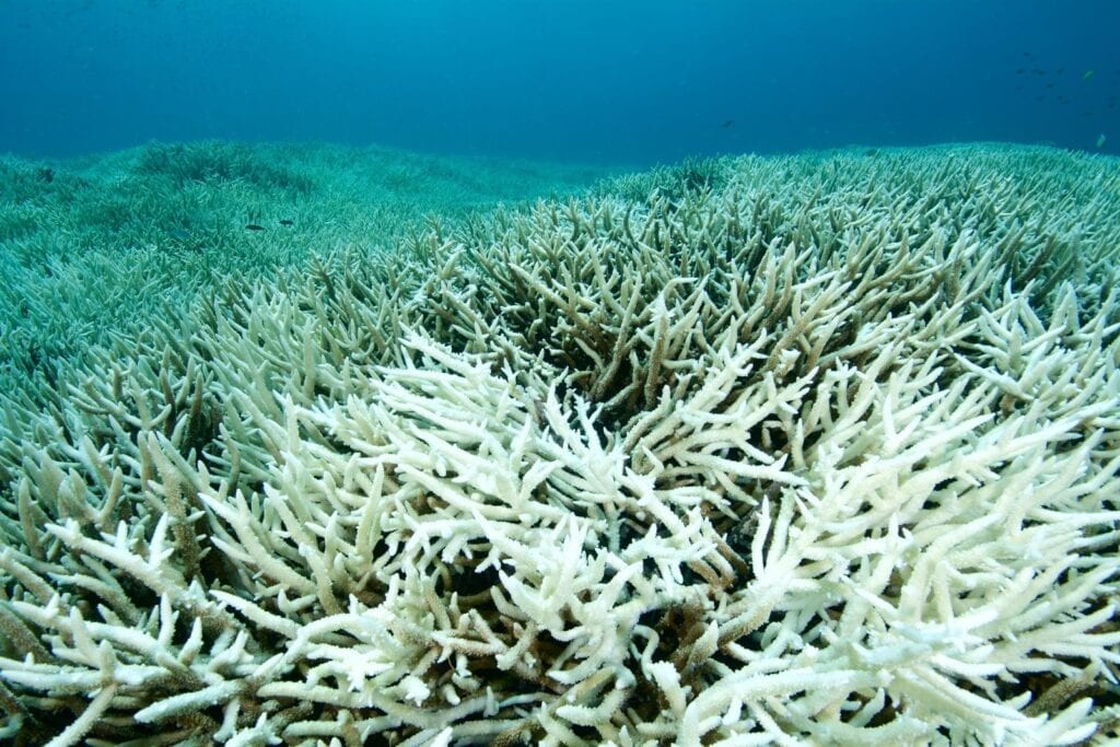 Your sunscreen ingredients such as oxybenzone could be killing your favourite coral reefs.